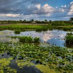 Section 404 of the Clean Water Act (CWA): Proposed Changes to Florida Wetlands