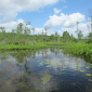 How to Permit a Wetland Mitigation Bank in Florida?
